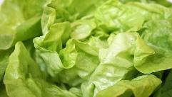 당신의 건강에 약이 되는 '채소'들!