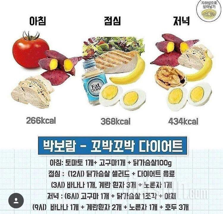 박보람식단