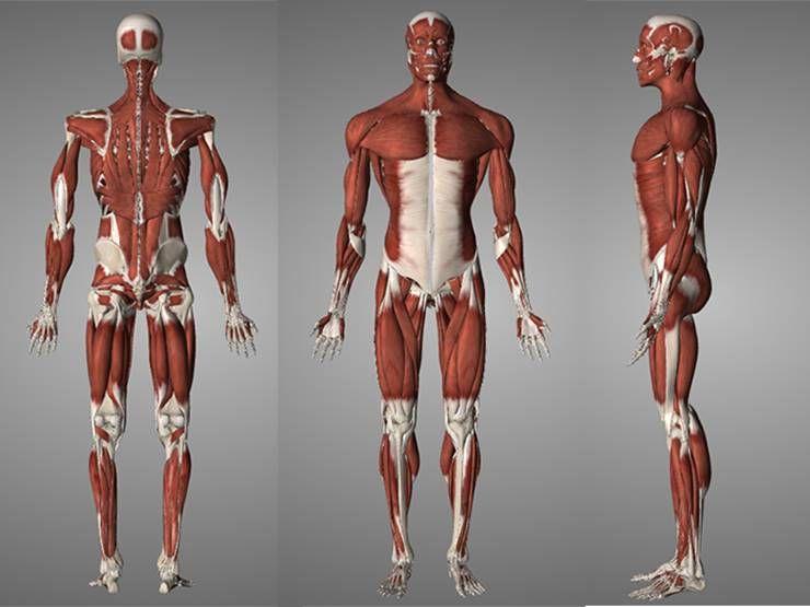 근육을 제대로 풀어보자! 근육 근막 이완!