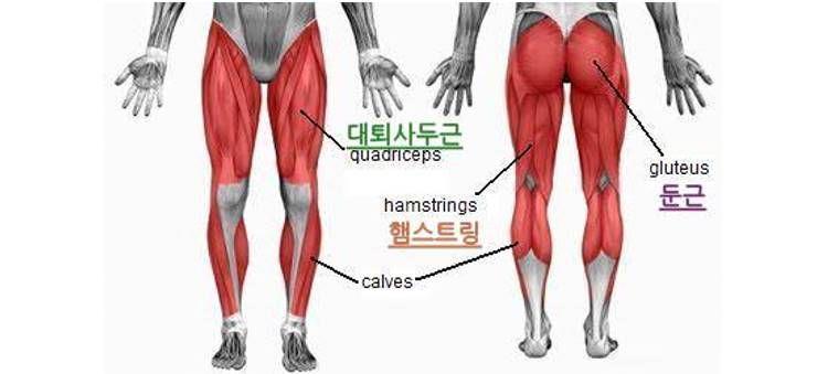 무릎이 안 좋다면, 주변 근육을 키워라?