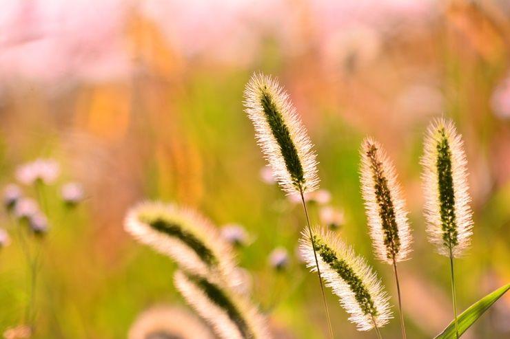눈도 즐겁고 건강에도 좋은 식용 식물 BEST!