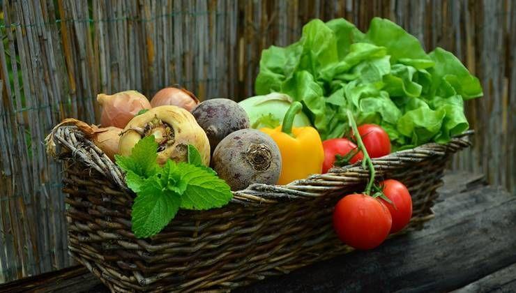 자연식물식 식단, 다이어트가 될까?!
