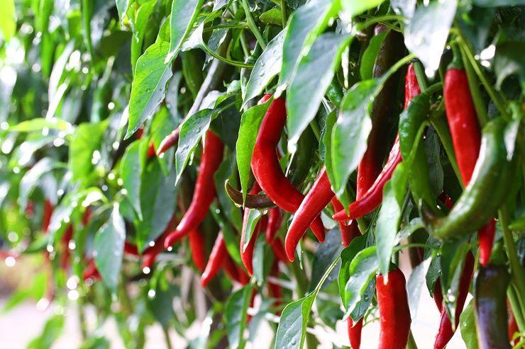 부위 별 다이어트에 도움되는 야채 BEST!