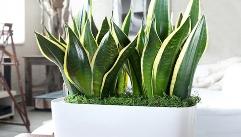 당신의 숙면을 도와줄 '실내 식물' 5가지!