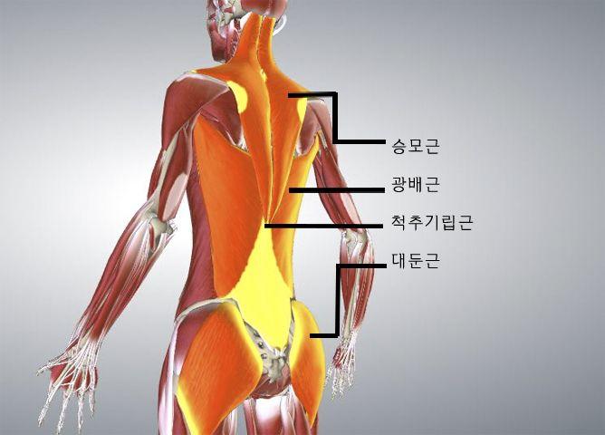 [Healthy Winter Series] 몸을 고치는 요가 2편 -척추측만증