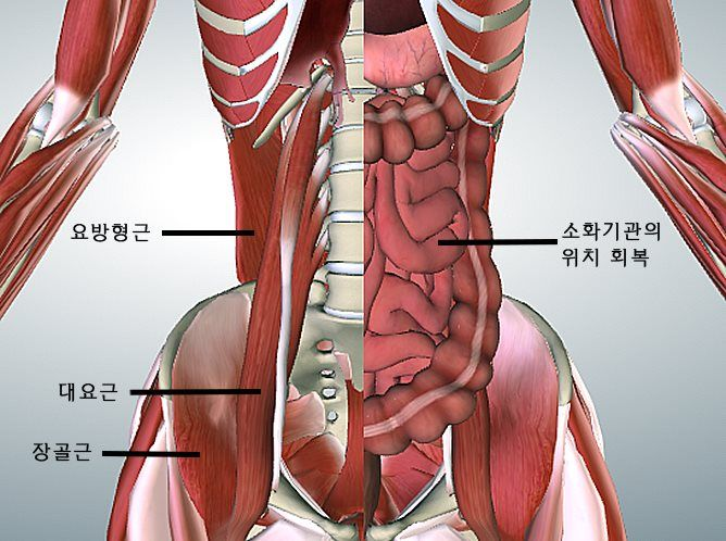 [Healthy Winter Series] 몸을 고치는 요가 3편 - 소화불량