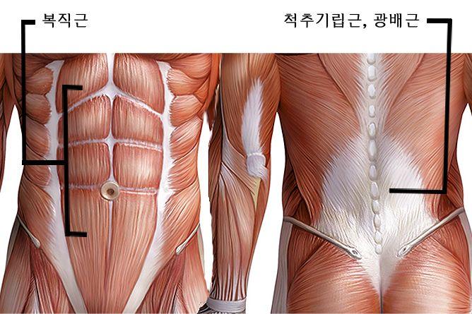 [Healthy Winter Series] 몸을 고치는 요가 4편 - 허리통증