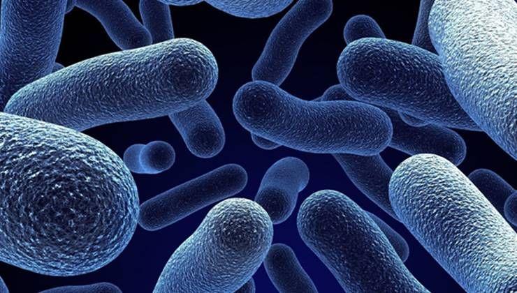 장내세균, 살이 찌고 빠지는 것과 관계가 있다?