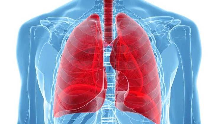 겨울철, 폐건강을 지켜주는 비법 식품 6가지!