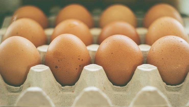 단백질은 무조건 많이 먹는 게 좋을까?