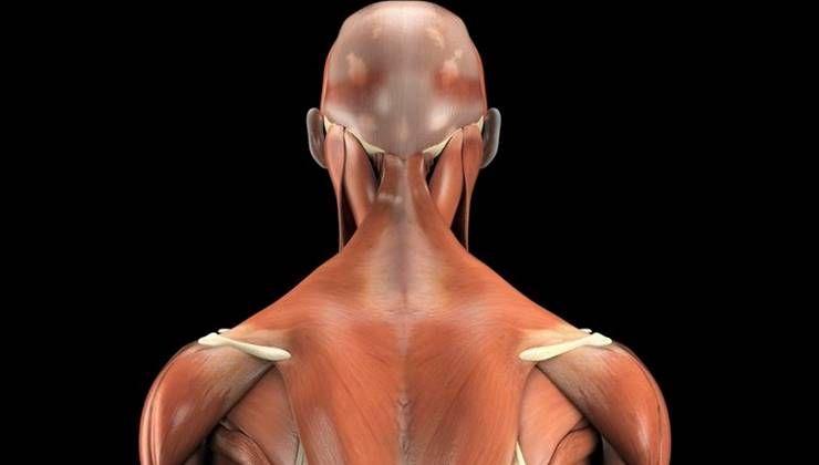 등 운동할 때, 어깨근육 아프다면?