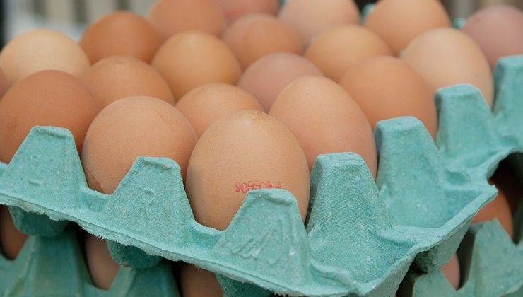 다이어트할 때, `토.닭.고` 섭취하세요!