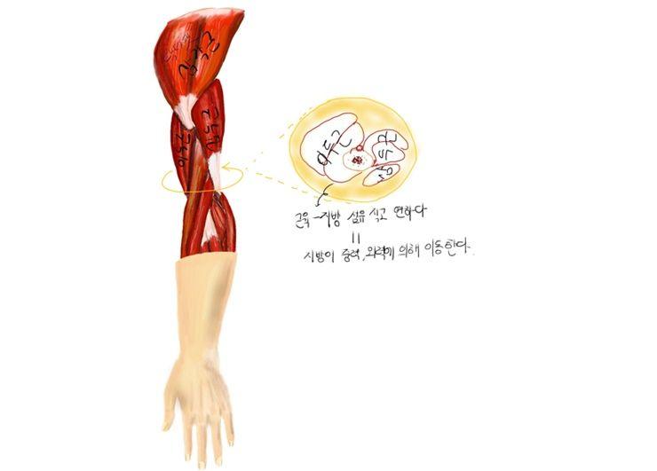당신의 팔, 날씬하게 만들어주는 운동 팁!