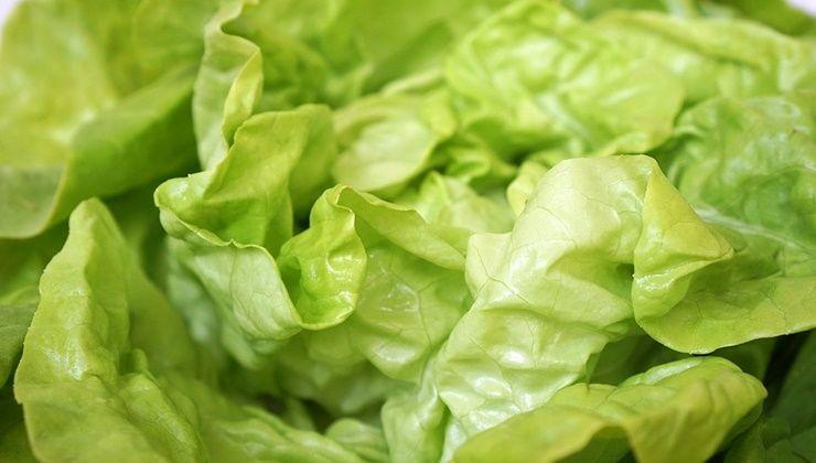 당신의 건강에 약이 되는 `채소`들!