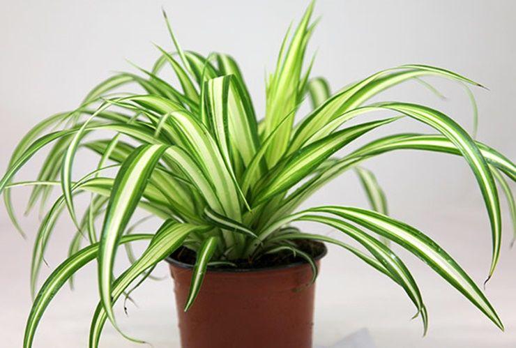 당신의 숙면을 도와줄 `실내 식물` 5가지!