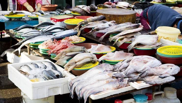 닭가슴살 못지 않게 다이어트에 좋은 생선들?!