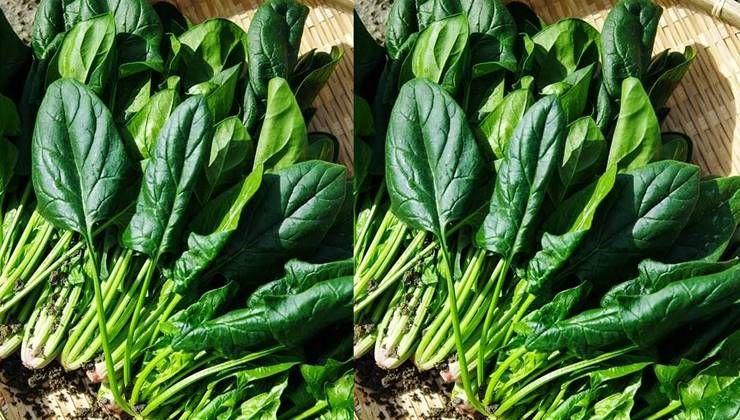 야채, 신선하고 아삭하게 먹으려면?
