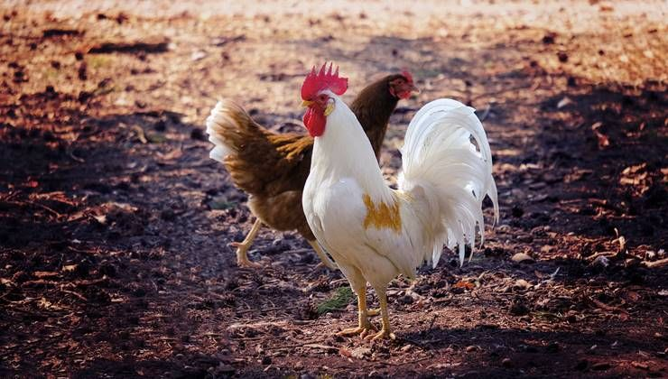 다이어터를 위한 닭고기 부위별 활용법?!