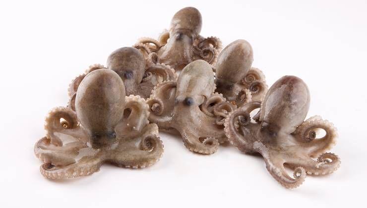 봄에 맛봐야 할 단백질 가득한 해산물 BEST4!